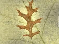 vanilla oak