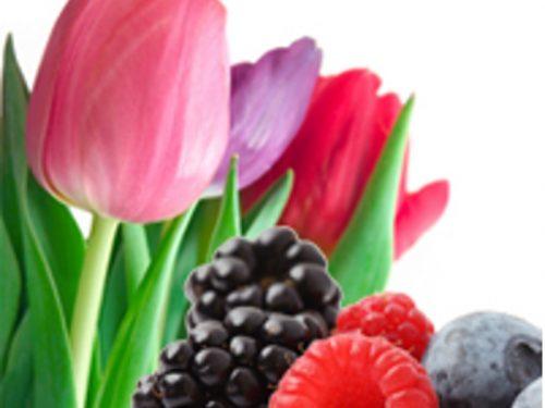 Wild Berry Tulips